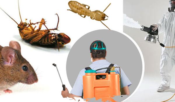 شركة مكافحة حشرات بالمملكة