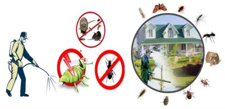 شركة مكافحة حشرات جنوب الدمام
